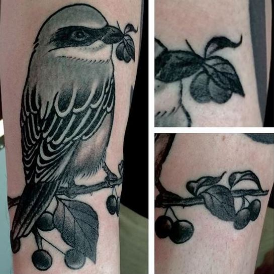 Ivan-Herrera-Tattoo-Berlin-Blackwork-bird